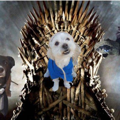 Team T on Throne