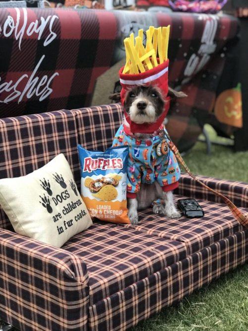 Barkley the Couch Potato