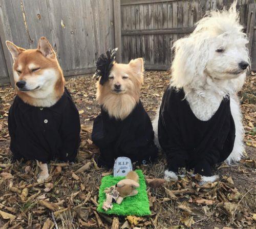 Squirrel Funeral