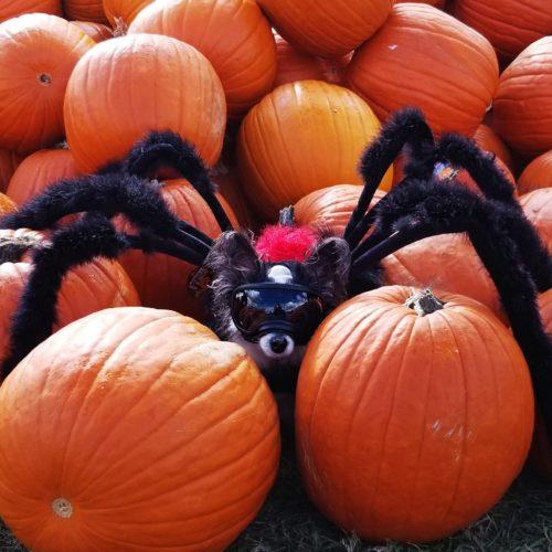 The Elusive Dog Spider