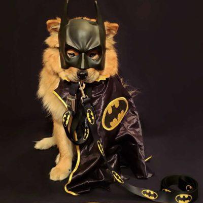 Batman Bow-Wows Gotham