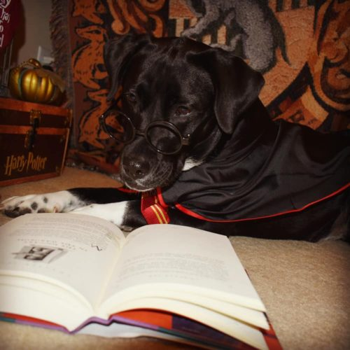 Harry Pawter…the Pup Who Lived