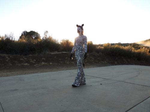 Head to Toe Zebra